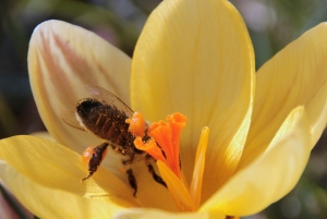 alergias-carabal-abeja