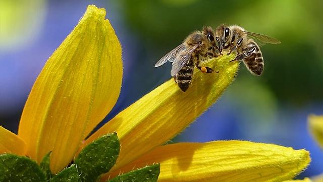 Jalea real, miel, propóleo, polen, ¿por qué son tan importantes para la salud?